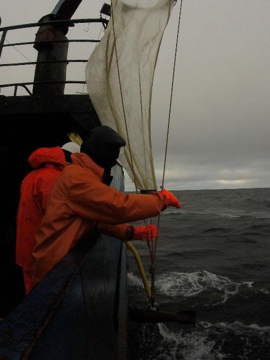 Отбор проб ихтиопланктонной сетью